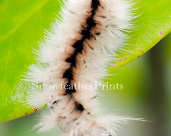 Caterpillar - Ships Free