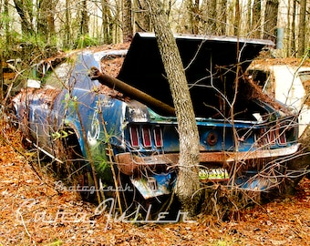 1969 Ford Mustang with tree growing in bumper Photograph
