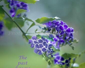 Affirmation, Positive Messsage,Nature,,Flower, Purple,  Garden, Mantra, Bedroom Art,Boudoir Art, Living Room Art, Wall hanging, Home decor,