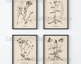 Set of 4 prints, Botanical print, Set of 4 wall art, Wall art set, Botanical art, Botanical illustration, Antique botanical print,  JPG