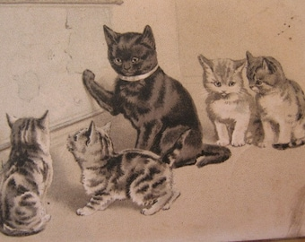 Antique B.W. Embossed Postcard.Cat and Kittens. The geography lesson.