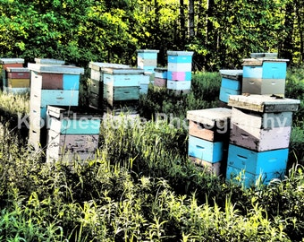Morning sun beehives photography, Beehive print, Nature photography, Colorful beehives prints