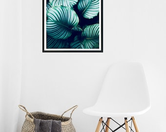 Modern Wall Art- Nature- Plants-