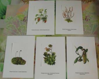 5 cards from the original of Gaston Bonnier plants Carnivores Dione catch flies Sarracenia Purpurea pitcher plant Drosera