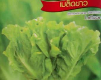 Lettuce 900 Thai Vegetable Seeds