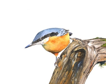 Nuthatch print of watercolor painting, A3 size print, NH2014, nuthatch watercolor painting, nuthatch painting, nuthatch print