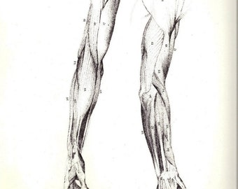 Human Anatomy Arm Muscles Antique Illustration by John Flaxman and Henry Landseer to Frame or Paper Arts, Collage & Scrapbooking PSS 2622