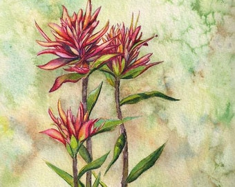 Indian Paintbrush Group ORIGINAL watercolor painting wildflowers nature bloom flower Montana red pink summer outdoors by Christy Sheeler
