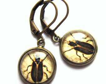 Beetle Earrings Sepia Tint Fashion Jewelry