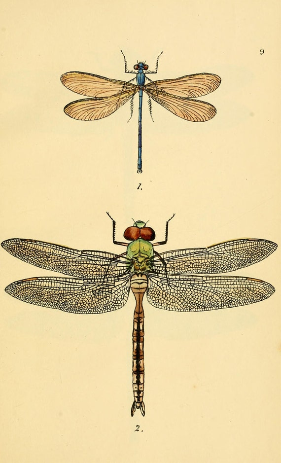 Vintage Dragonfly Diagram - Information Of Wiring Diagram •