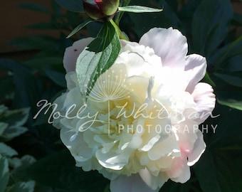 Flowers Digital Download