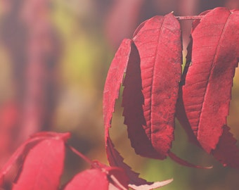 Red Leaves couleur Photo Print {Bourgogne, vert, bush, feuilles, automne, soleil, soleil, art pariétal, macro, nature & fine art photography}