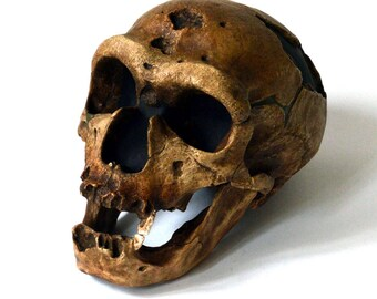 Neanderthal Skull Replica