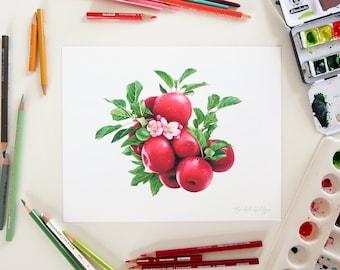 Apple Blossom Illustration // 8x10 Art Print, botany, farmhouse decor