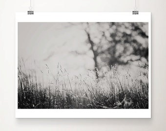 black and white photography winter frost photograph grass photograph tree photograph nature photography countryside photograph