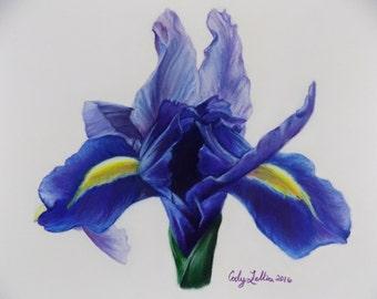 "Iris Pastel 9""x12"" Giclee Print"