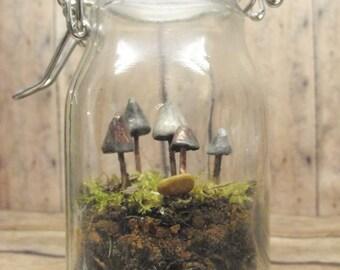Terrarium Supplies, DIY Terrarium Kit, Glow in the Dark, Mushroom Terrarium, Garden Party, Mushroom specimen, Glass Terrarium, Jar plant