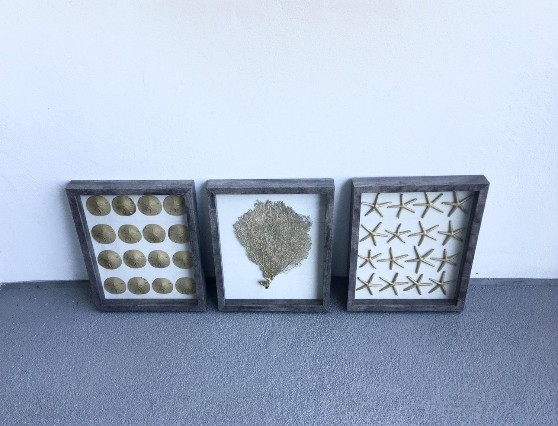 Conjunto de 3 enmarcado oro estrella de mar arena dólares y abanicos ...