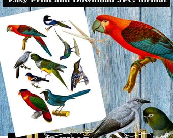 VINTAGE BIRD Collage Sheet,Birds Collage,Bird Decoupage,bird die cuts,Beautiful Birds Images Digital Download Printable Graphic