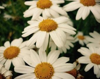 Floral Art, Floral Art Print, Floral Nursery, Floral Nursery Print, Floral Nursery Art, Floral Nursery Wall Art, Floral Nursery Decor, Flora