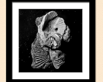 Shell Fossils Photo / Shell Fossils Print / Abstract Nature Art / Nature Photography / Fine Art / Square Prints / Unique Nature Art
