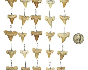 25 Wire Wrapped Fossilized Shark Teeth Pendants - Shark Tooth Fossil