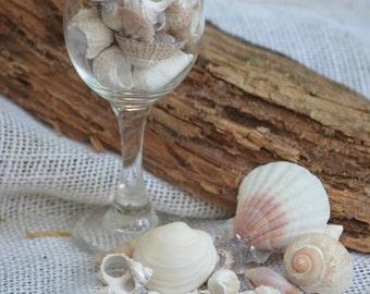 Seashell variety, small seashells (10 oz. approx. 50 to 60 shells), shell collection, beach crafts and decor, coastal decor