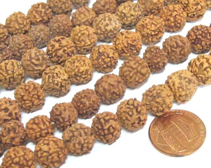 50 beads supplies - Natural Rudraksha seed beads from Nepal 10 mm -tibetan mala supplies  ML072C