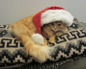 Photo of a holiday cat