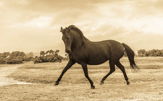 Dancing Horse, horseart, equineart, horse print,sepia toned print, limited edition print