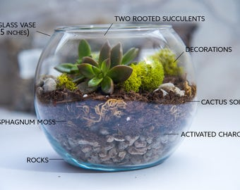 MEDIUM size Succulent Terrarium Kit, Succulent Terrarium, Glass Terrarium, gift for her, diy Gifts, Mother's day Gift