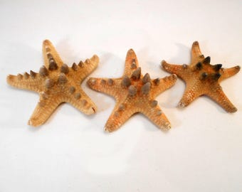 "3 Large Knobby Starfish (4-5"") Beach Wedding Decor Crafts Coastal Nautical Hobby"