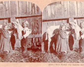 Little Girls Feeding Their Baby Burro Stereoview Photo
