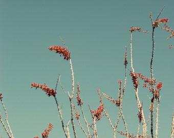 Désert toile impression, désert imprimé surdimensionné, photo ocotillo, photo plante désertique, Tucson, photo de l'Arizona, photo rétro