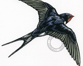 Swallow, barn,  scratchboard - bird art, wildlife art - nature print of original artwork