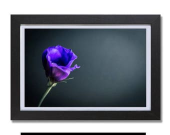 Purple Flowers,Flower Pictures,Flower Photography,Flower Prints Wall Art,Flower Petals,Flower Canvas,Flower Frame-Sells UK/USA and Australia