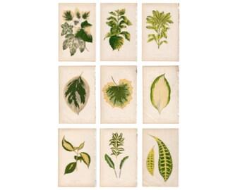 9x ANTIQUE LEAF PRINTS c.1861 - botanical lithographs - original antique prints by Lowe - leaved plant horticulture leaves foliage
