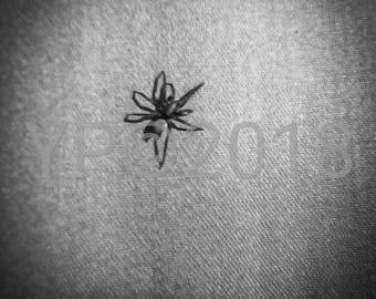 Black and White Spider Instant Digital Download