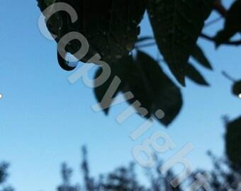 Morning dew drop photograph print