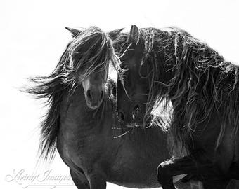 Two Sable Island Stallions II - Fine Art Horse Photograph - Horse - Sable Island - Wild Horse - Black and White -Fine Art Print
