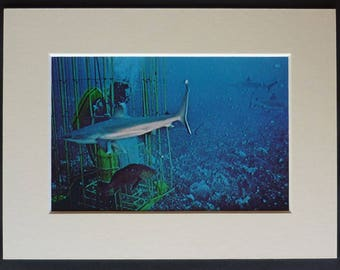 Vintage Diving Print From One Of Jacques-Yves Cousteau's Expeditions Shark Decor photographed by Philippe Cousteau - Retro Scuba Diver Gift