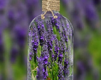 LAVENDER INFUSED OIL Kit, Lavender Branches Fragrant Edible Decorative 25 Stems Plus Decorative Glass Jar