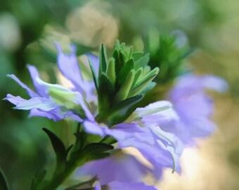Blue Flowers Digital Oil Pastels Painting