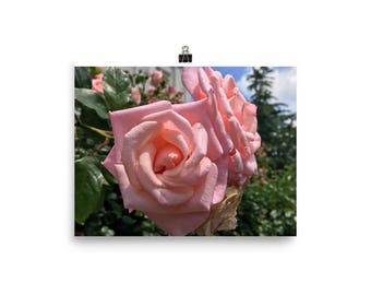 Rose photography Poster