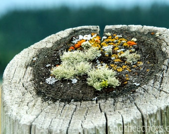 Fine Art Photography, Nature Photography, Moss and lichen on wood, Subdued tones
