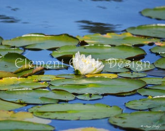 Water Lily, Instant Download, 10x8, Digital Printable, Fine Art Digital Photo, Photography, flower photo
