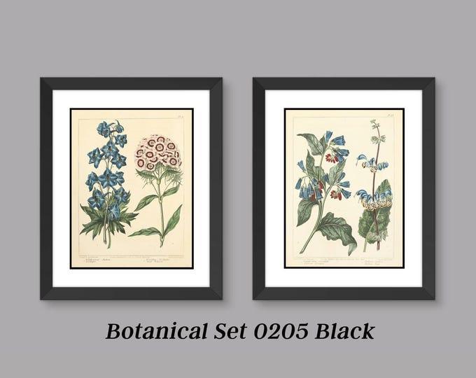 Botanical Print Set -Antique Botanical Prints - 2 Print Set - Matted and Framed - Free Shipping - Black or White Frame - In  Many Sizes