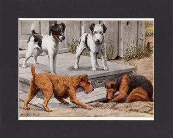 Terriers 1919 Vintage Dog Print by Louis Agassiz Fuertes Vintage Painting Mounted with Mat  Fox Terrier Welsh Irish Terrier
