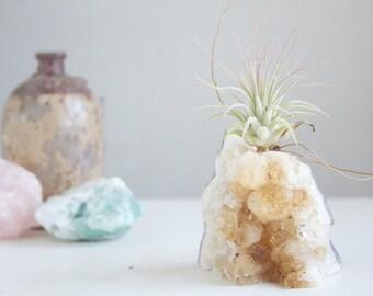 Gardening Gift, Unique Air Planter on Citrine Geode Chunk, Golden Brown Crystal Garden, Gift for Her, Boho Decor, November Birthstone