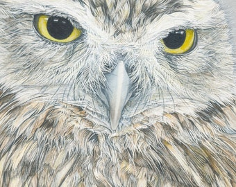 Little Owl  Watercolor Print 5x7  5 by 7